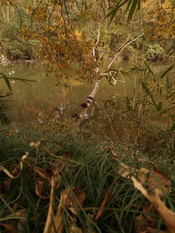泉自然公園亀と鳥